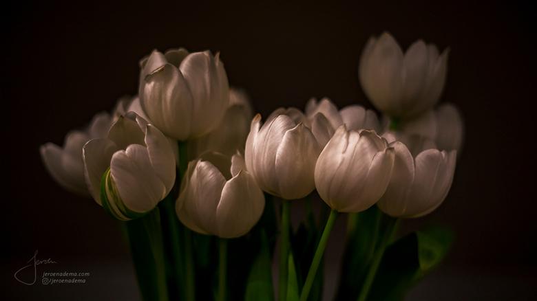 Stilleven III - Deze tulpen stonden al even op tafel. Ze zitten nu tegen het uitbloeien aan, en dat geeft een mooi effect. Ik heb de hooglichten extra