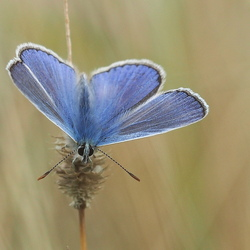 Touch my blue wings