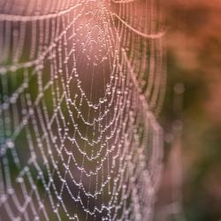 Web in ochtenddauw