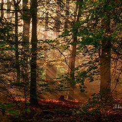De zon komt door de bomen in het Speulderbos