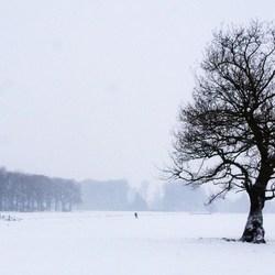Eenzame schaatser in een sneeuwbui