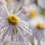4376  dauw op de bloemen