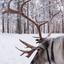 Lapland, Salla