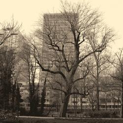 Rotterdam….