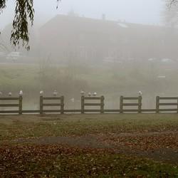 Meeuwen in de mist 1