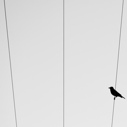bird on a different wire.