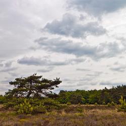 Landschap Wolfheze