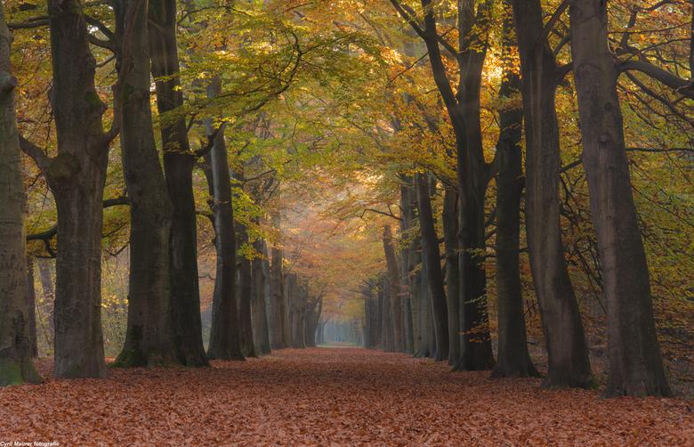 De Herfst in zijn kleur en pracht 2 - Ik kwam terug van een dag werken in de sportschool uit Hilversum. En ik keek rechts van me waar ik altijd net vo