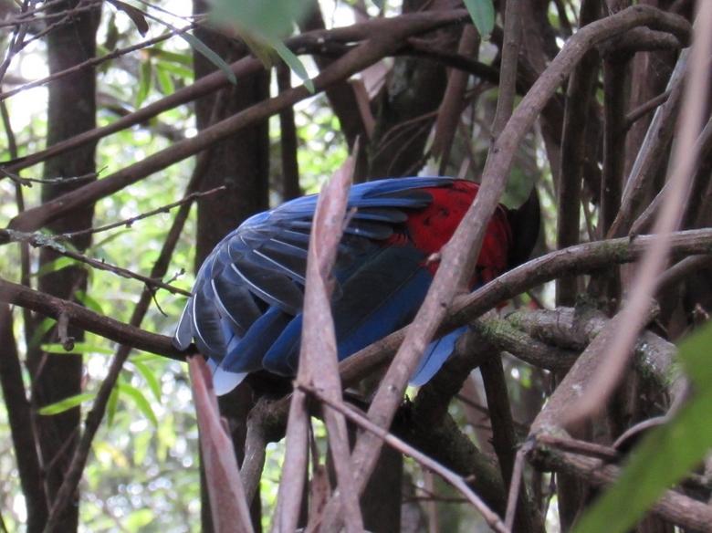 Cameravrees... - Deze vogel in Wilson's Promontory (Vic. Australia)  is zijn veren aan het strekken. Dit leverde dit mooie plaatje op.