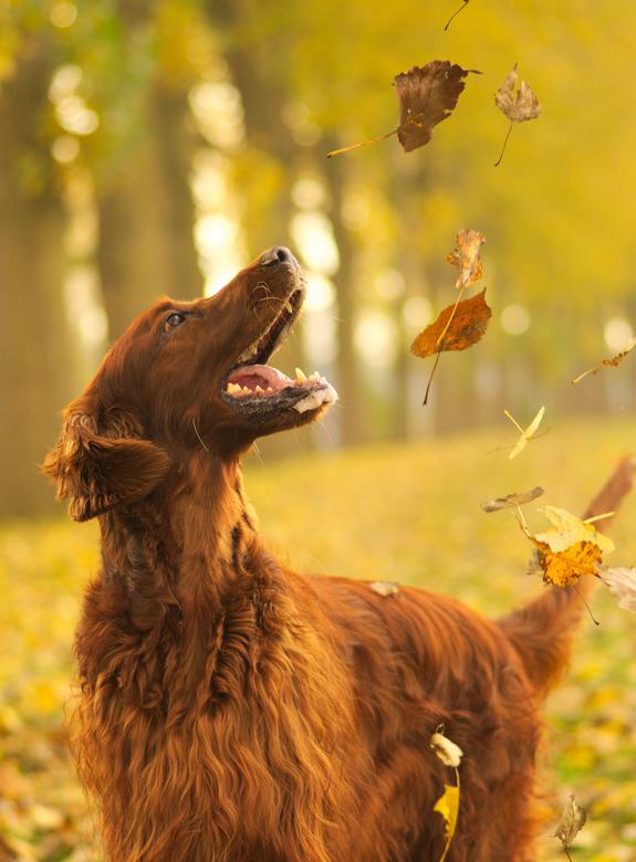 Dogs do smile.....my happy dog! - Een foto waar je vrolijk van wordt...…<br /> <br /> Mijn eigen hond is een perfect model om de liefde voor hondenf