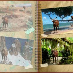 Bewerking: Vakantieplakboek