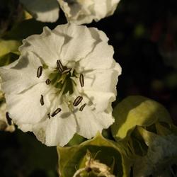 wit fijn bloempje