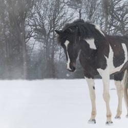 Mijn paardje in de sneeuw.