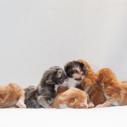Kittens 1 week