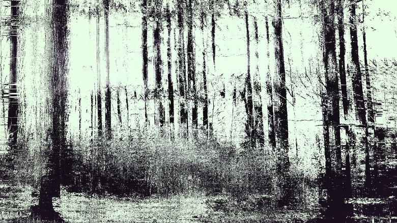 Forest - Moving wood