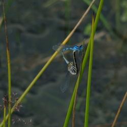 Huis ter Heide, libelles