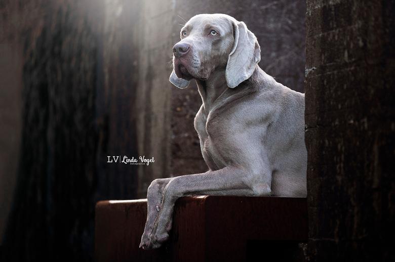 Ferro - Honden blijven heerlijke modellen om vast te leggen!