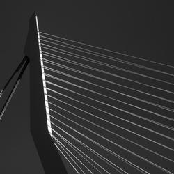 Bewerking: Details of the Swan