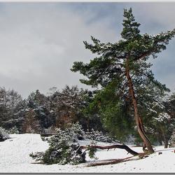Winter in de Lente.