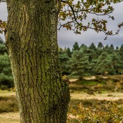 02273 boom in de weg