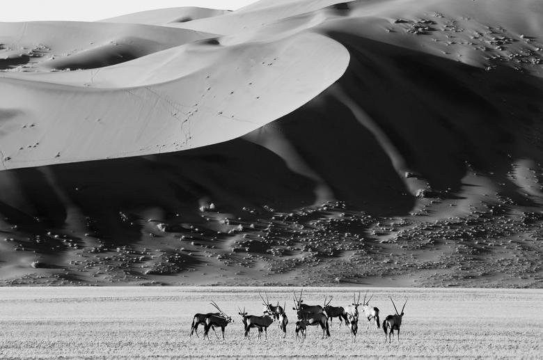 Oryx & Dunes - Sossusvlei, Namibie.