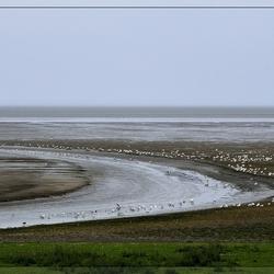 Zwarte Haan aan de Waddenkust van Friesland