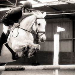 Jumping Lisse