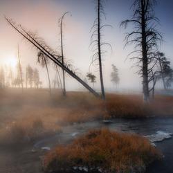 Dead tree sunrise part II