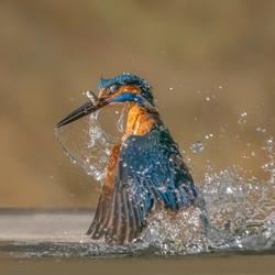 Vangst van de dag.