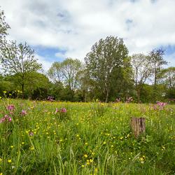 Park Voorveldse polder