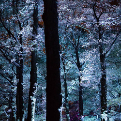 Glowing forest