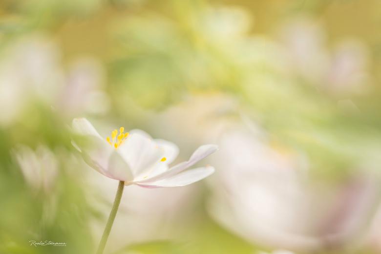 De bloemetjes buitenzetten -
