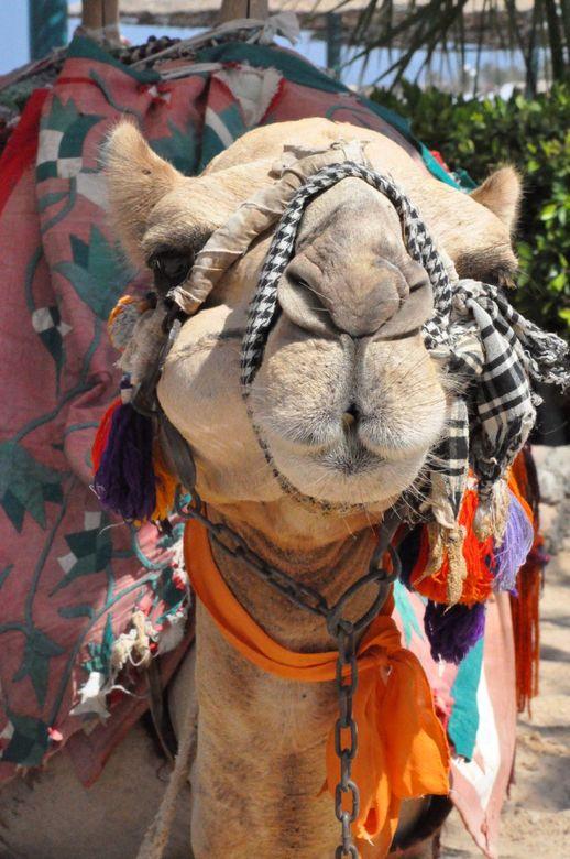 egypte - Even uitrusten van een warme vermoeiende dag.<br />