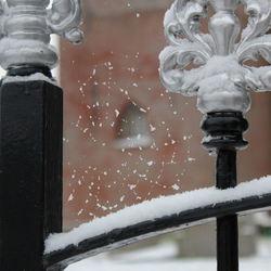 eerste sneeuw, tere vorm