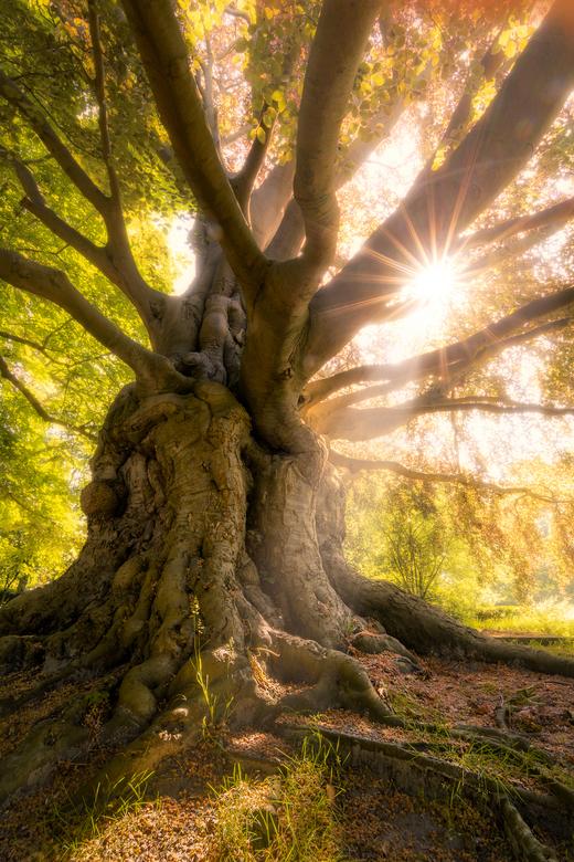 ENT - Als deze boom toch eens zou kunnen praten... <br /> Deze beuk is waarschijnlijk in 1827 geplant. Ik had hem &#039;gevonden&#039; via de instagr
