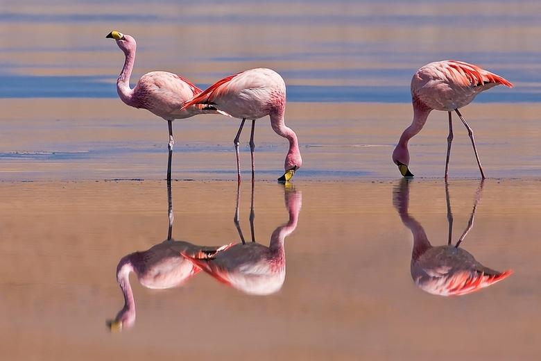 Pink reflections - Tijdens een rit doorheen Zuid Lipez in Bolivia zie je, zelfs op 4000m hoogte,  aan veel lagunes flamingo's. Alhoewel het mooi