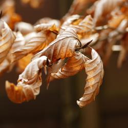 herfstkleuren in het voorjaar