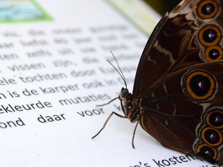 slimme vlinder - deze vlinder leek de tekst grondig te bestuderen