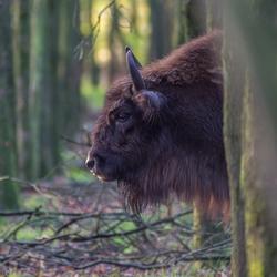De Wisten in het bos