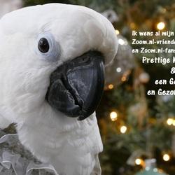 Mijn foto-kerstwens aan alle mede-Zoomers, met mijn Maxi in de hoofdrol!