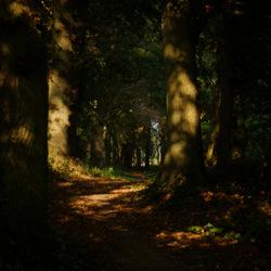 Even door het Ter Wuppingse bos struinen