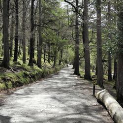 Glendalough Forest
