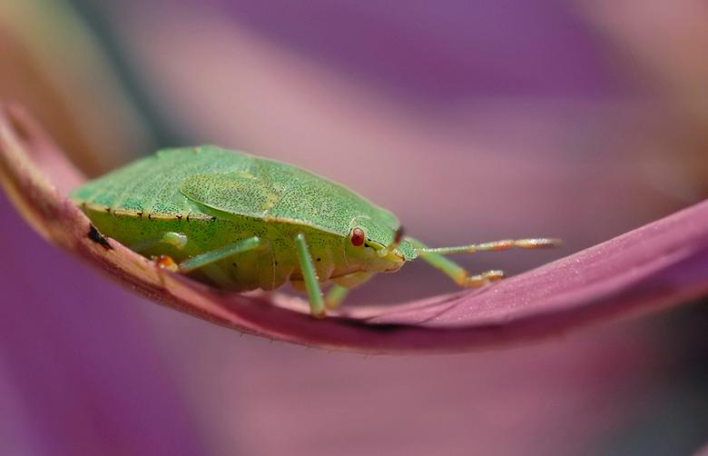 Wansje - Vanmorgen in de tuin een wansje gevonden. Ik vind de kleuren persoonlijk erg lekker bij deze foto.<br /> <br /> Nikon D200<br /> Nikor 60m