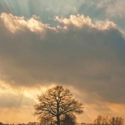 THE LONE TREE STOUTENBURG