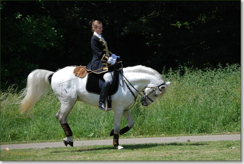 Paard op één voet - Bij de voorbereiding op de dressuur show tijdens de Westerveld fair in Elden, schoot ik deze afbeelding. Het paard begon nét te bo