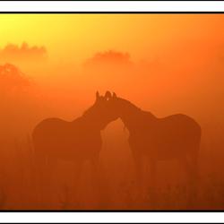 Ontmoeting in de mist