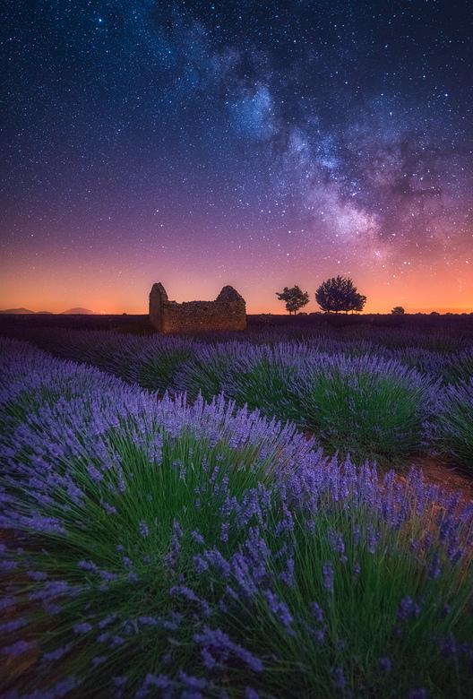 A Lavender Night - Een prachtig heldere nacht in de buurt van Valensole, waar de beroemende Lavendel velden te bezichtigen zijn deze weken.