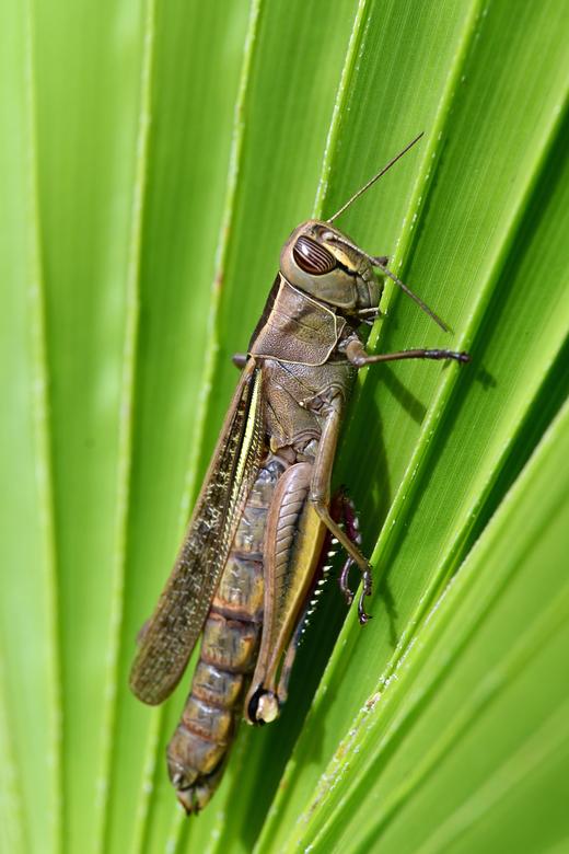 winterpret - In Spanje kun je óók in de winter insecten observeren en fotograferen. De aantallen zijn wel veel minder dan in het voorjaar en de zomer.
