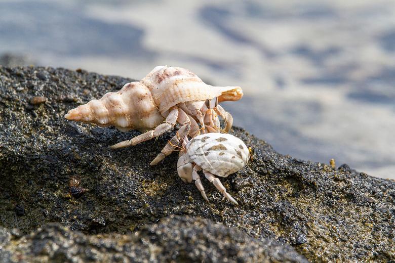 heremietkreeftjes - Op het strand van Marsa Shagra is niet veel te zien, Totdat je beter kijkt en overal van deze kleine heremietkreeftjes ziet lopen.