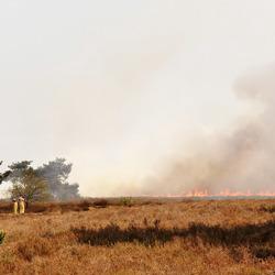 Heidebrand